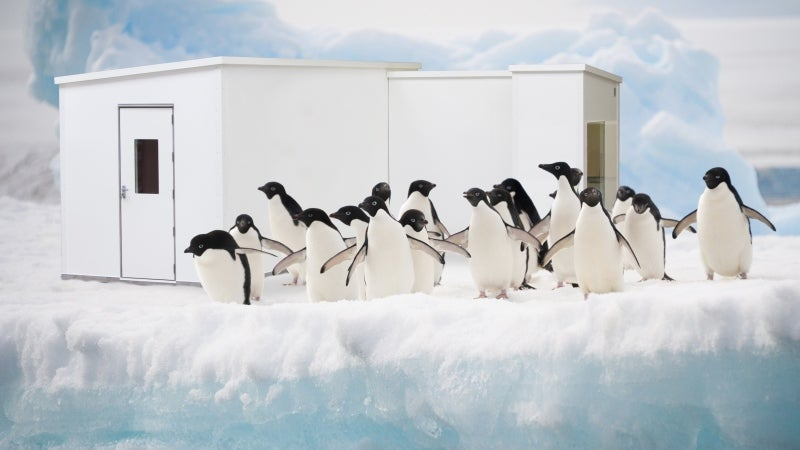 penguins on ice